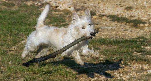 Hayvanlar Aleminin Oyunlar ile İmtihanı